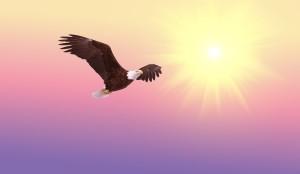 fliegender-adler