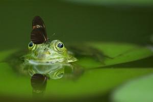frosch-schmetterling-spiegel
